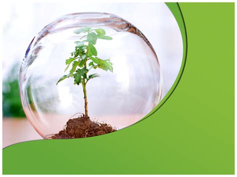save tree  template save tree powerpoint template