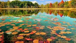 Lotus, Leaves, On, Body, Of, Water, Surrounded, By, Green, Trees, During, Daytime, With, Reflection, Hd, Nature