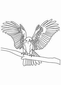 Tapered Wings Falcon Bird Coloring Pages | Animal Coloring ...