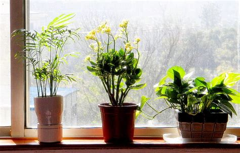 Bedroom Plants For Insomnia by These 5 Plants For The Bedroom Will Cure Insomnia And Help