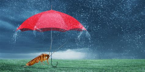 rainy day pests     griffin pest solutions