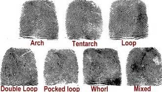 Image result for types of fingerprints