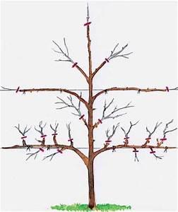 Alten Walnussbaum Schneiden : spalierobst richtig schneiden oder und garten ~ Lizthompson.info Haus und Dekorationen