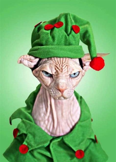 super cute animals  dressed   christmas