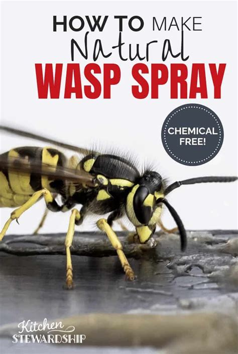 natural wasp killer  rid  wasp nests  chemicals