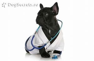 Обезболивающие препараты при артрите у собак