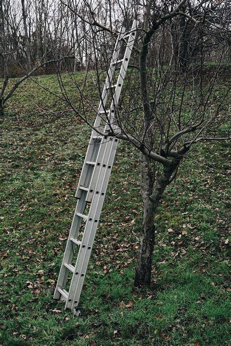 Soll Den Garten Im Herbst Umgraben by Richtig Im Garten Fabulous P Diesen Tipps Wird Herbstlaub