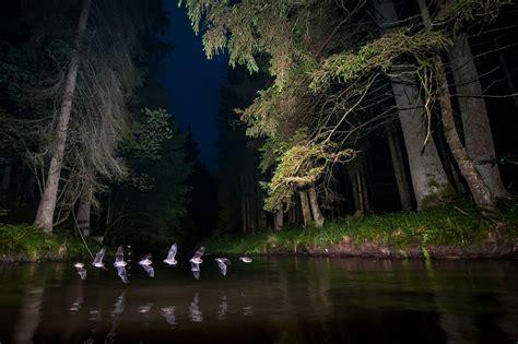 ingo zahlheimer fledermaeuse im stroboskopblitzlicht