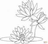 Coloring Pages Water Lilies Lily Drawing Printable Paper sketch template