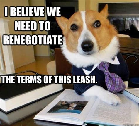 lawyer dog  memes