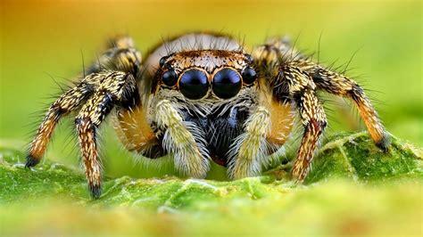 Heimische Spinnen 8 Beine 8 Augen 8 Arten Blühendes
