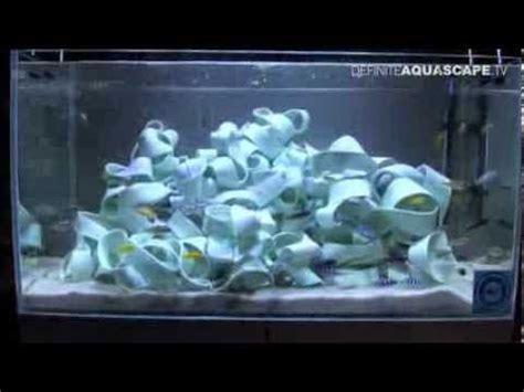 Aquascaping Cichlid Aquarium by Pin By Koren Brezniak On Aquascaping Cichlids