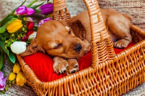 petit panier de basket pour chambre le petit chien qui dort dans le cubby près de fleurs