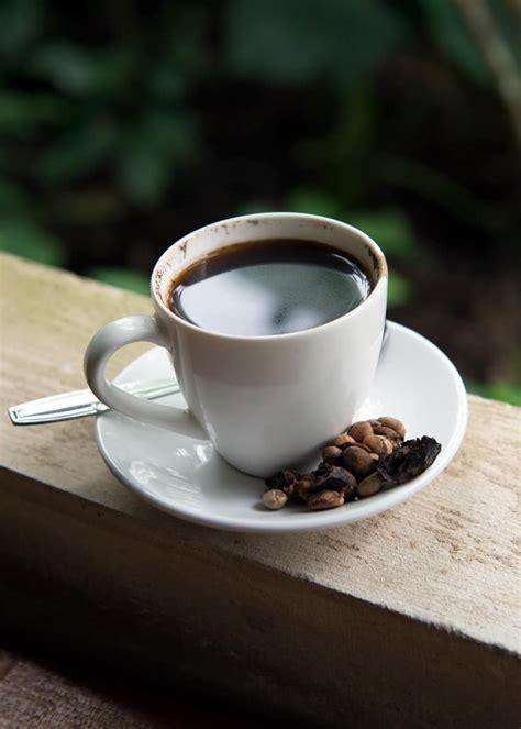 Kopi Luwak Civets Coffee civet coffee all about kopi luwak coffee and the cat
