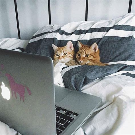 Funny Cats Watch Youtube In Bed Luvbat