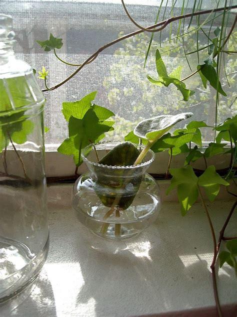 water garden plants indoor water garden growing plants in water year