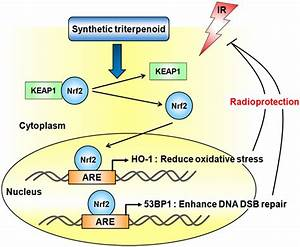 NRF2 | Oxidative Stress(OS) is linked to over 200 Diseases ...