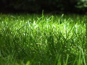 Comment Refaire Sa Pelouse : conseils pour cultiver votre propre pelouse diversites guide de jardin ~ Carolinahurricanesstore.com Idées de Décoration