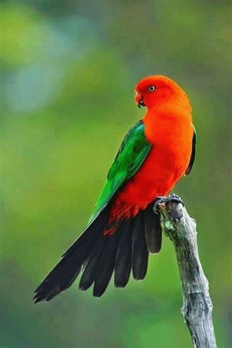 tehseen abidis blog animals birds flowers  nature