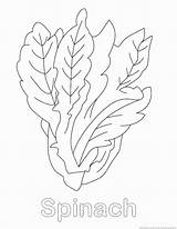 Spinach Coloring Vegetable Drawings Pages Designlooter 123coloringpages 930px 18kb sketch template