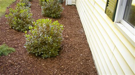 How Close To House To Plant Shrubs Land Designs