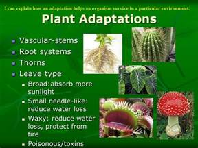Vascular Plant Adaptations