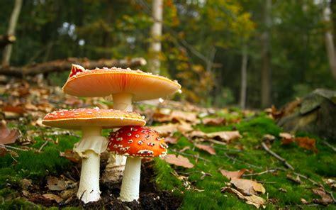 Beautiful Mushroom Plant Free Hd Widescreen Wa #11145