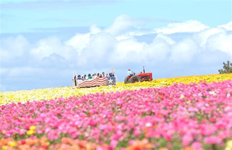 flower fields discount coupon september  coupons