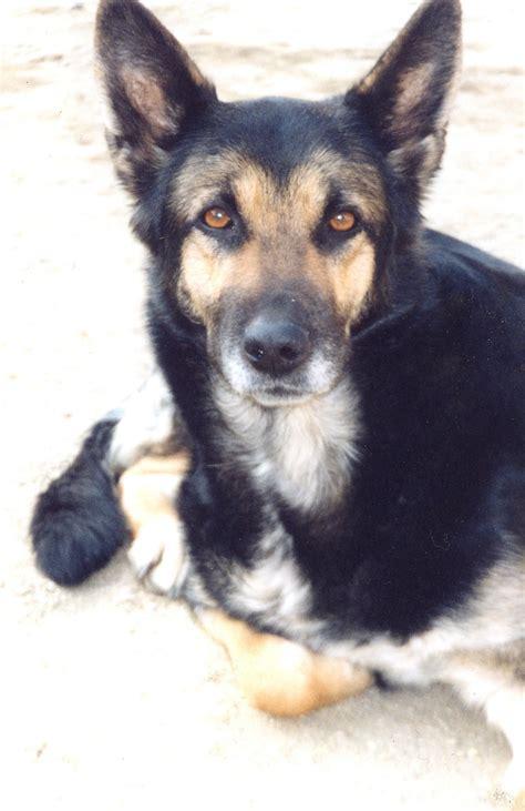 My Dog´s - Dogs Photo (5062572) - Fanpop