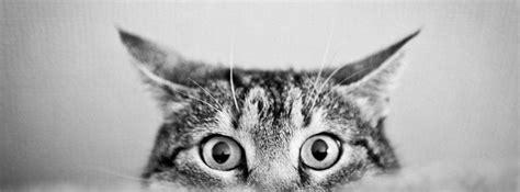 miradas de animales portadas hd  facebook