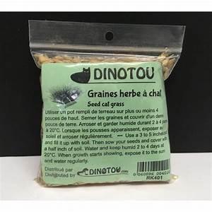 Graine Herbe A Chat : graines faire pousser de l 39 herbe digestive pour chat ~ Melissatoandfro.com Idées de Décoration