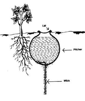 pitcher irrigation  method    earthen