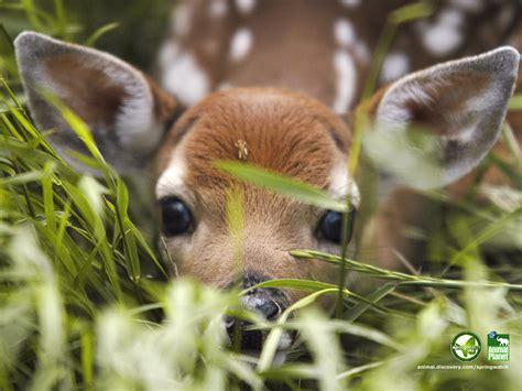animal cognizance spring brings baby animals