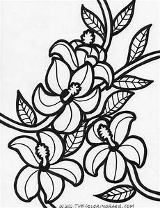 Hawaiian Flower Coloring Pages Getcoloringpagescom