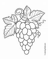 Grape Leaves Drawing Grapes Draw Getdrawings sketch template