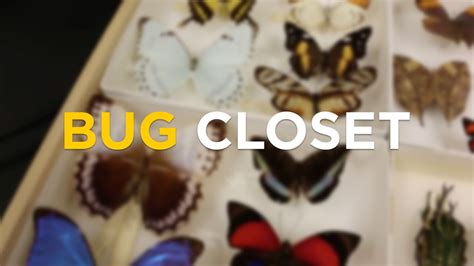 Closet Bug by Take A Look Into Ucf College Of Sciences Bug Closet