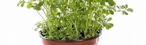 Plante Repulsif Mouche : les plantes naturellement r pulsives conseil jardin botanic botanic ~ Melissatoandfro.com Idées de Décoration