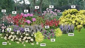 Plantes Vivaces Pour Massif : kit de vivaces pour un massif color ~ Premium-room.com Idées de Décoration