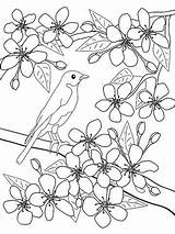 Spring Coloring Blossom Cherry Flowers Blossoms Pages Flower Japanese Worksheet Printable Bird Tree Adult Colouring Parents Education Nature Printables Apricot sketch template