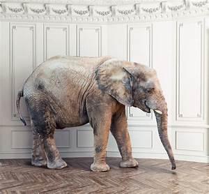 Nettoyer Du Parquet : comment nettoyer un parquet brut dcoller parquet with ~ Premium-room.com Idées de Décoration