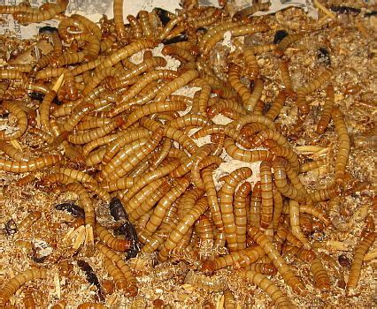 17 best images about worms on pinterest freezers
