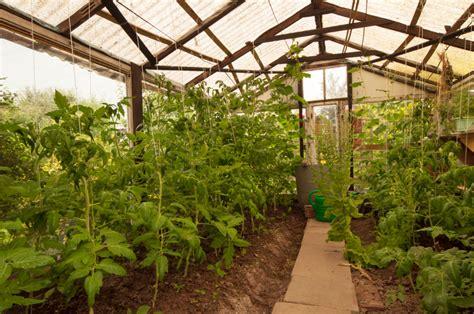 was kann in ein gewächshaus pflanzen tomatendach als regenschutz 187 wissenswertes