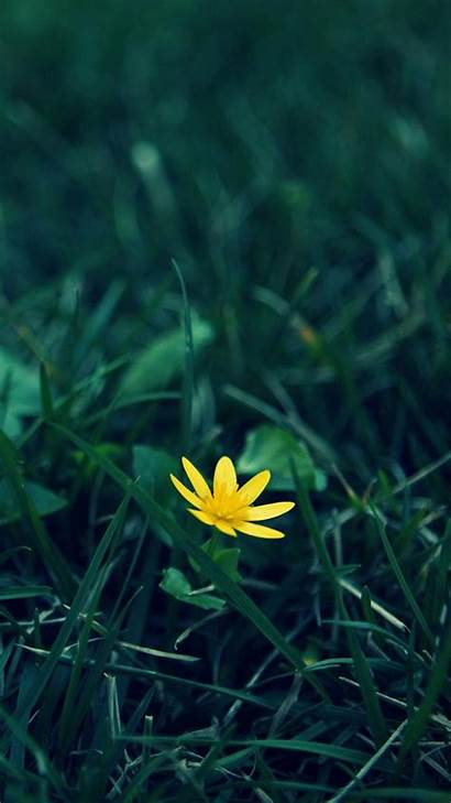 Yellow Background Flower Iphone Wallpapers Nature 4k