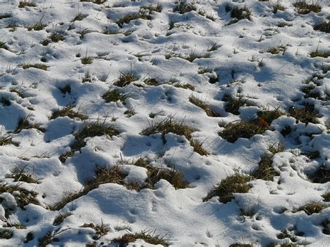 Rasenpflege Im Winter by Unser Gartenkalender F 252 R Januar Gartenmagazine De
