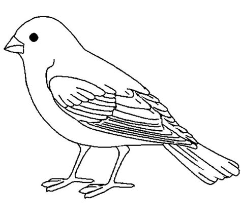 bird pictures to color canary bird coloring pages best place to color