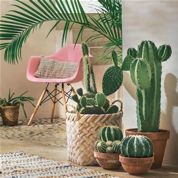 Bienfaits Du Cactus Dans Une Maison by Tendance Tropicale De L Exotisme Dans Votre D 233 Co 21 04