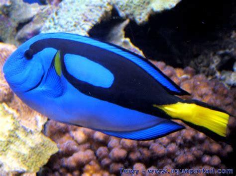poisson d eau de mer pour aquarium poisson eau de mer prix poisson naturel