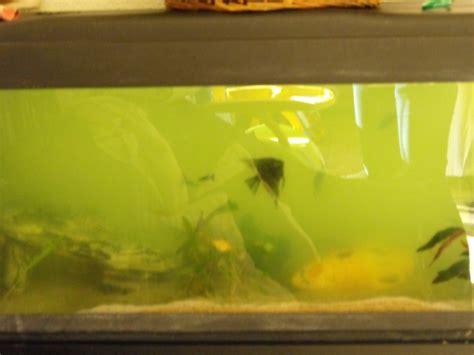 probleme eau verte aquarium probl 233 me eau trouble et verte apr 233 s changement d eau