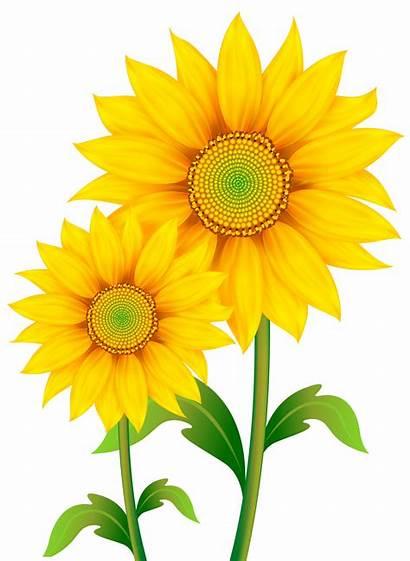 Transparent Clipart Sunflowers Flowers Yopriceville
