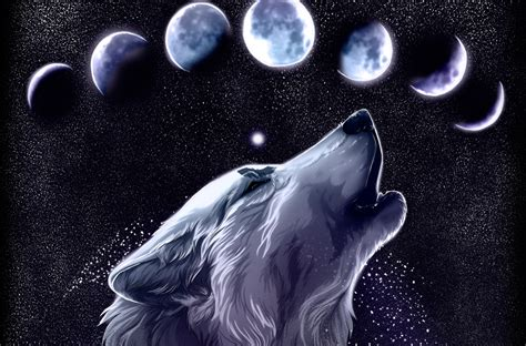 Dudespie Images Wolves Hd Wallpaper And Background Photos